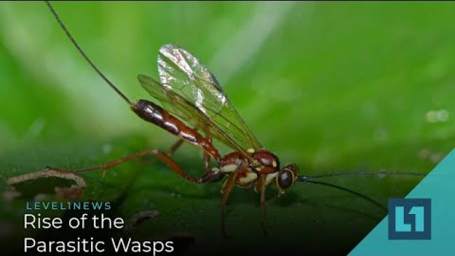 Embedded thumbnail for Level1 News February 26 2021: Rise of the Parasitic Wasps