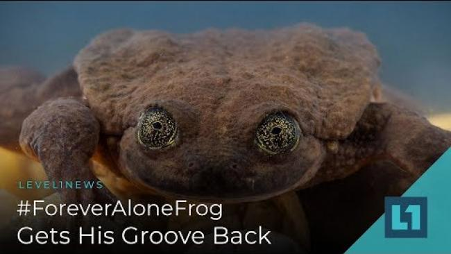 Embedded thumbnail for Level1 News January 25 2019: #ForeverAloneFrog Gets His Groove Back